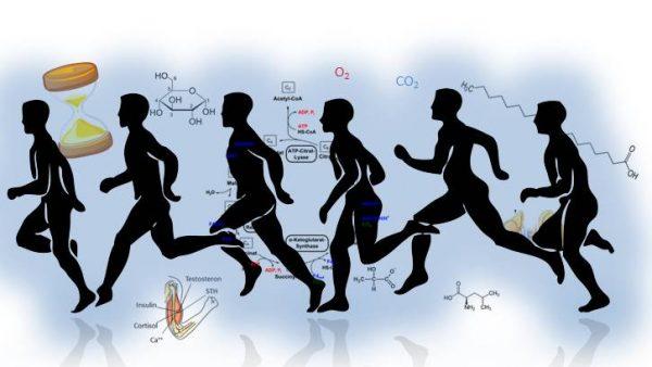 Endokrinologie; Sport; Hormone; Stoffwechsel