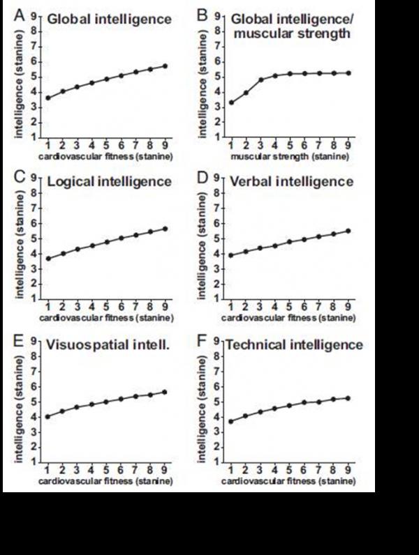 Eine hohe körperliche Leistungsfähigkeit geht mit einer höheren Intelligenz einher!