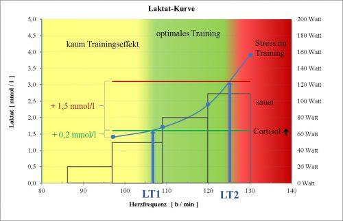 Optimale Trainings-Herzfrequenz in Abhängigkeit vom Laktat.